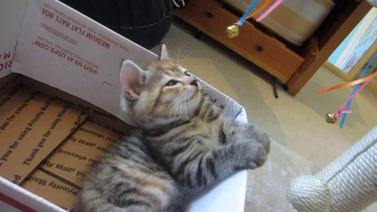 Cute kitten gets hypnotized