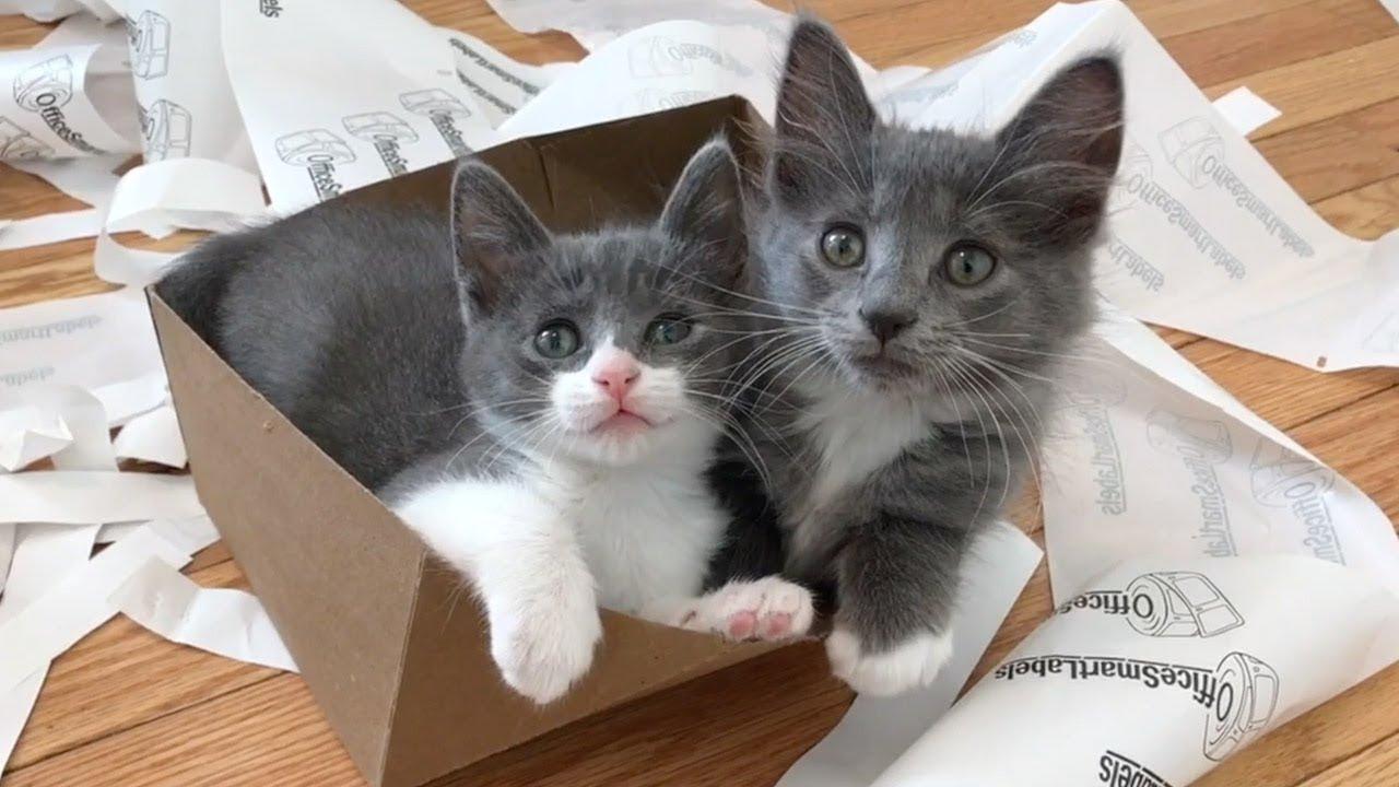 Kittens enjoying life