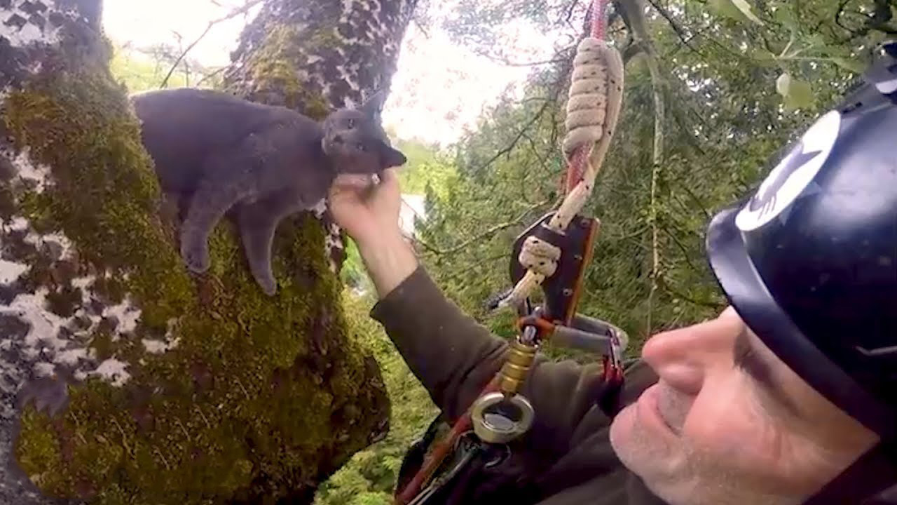 Rescuing cats stuck in the trees