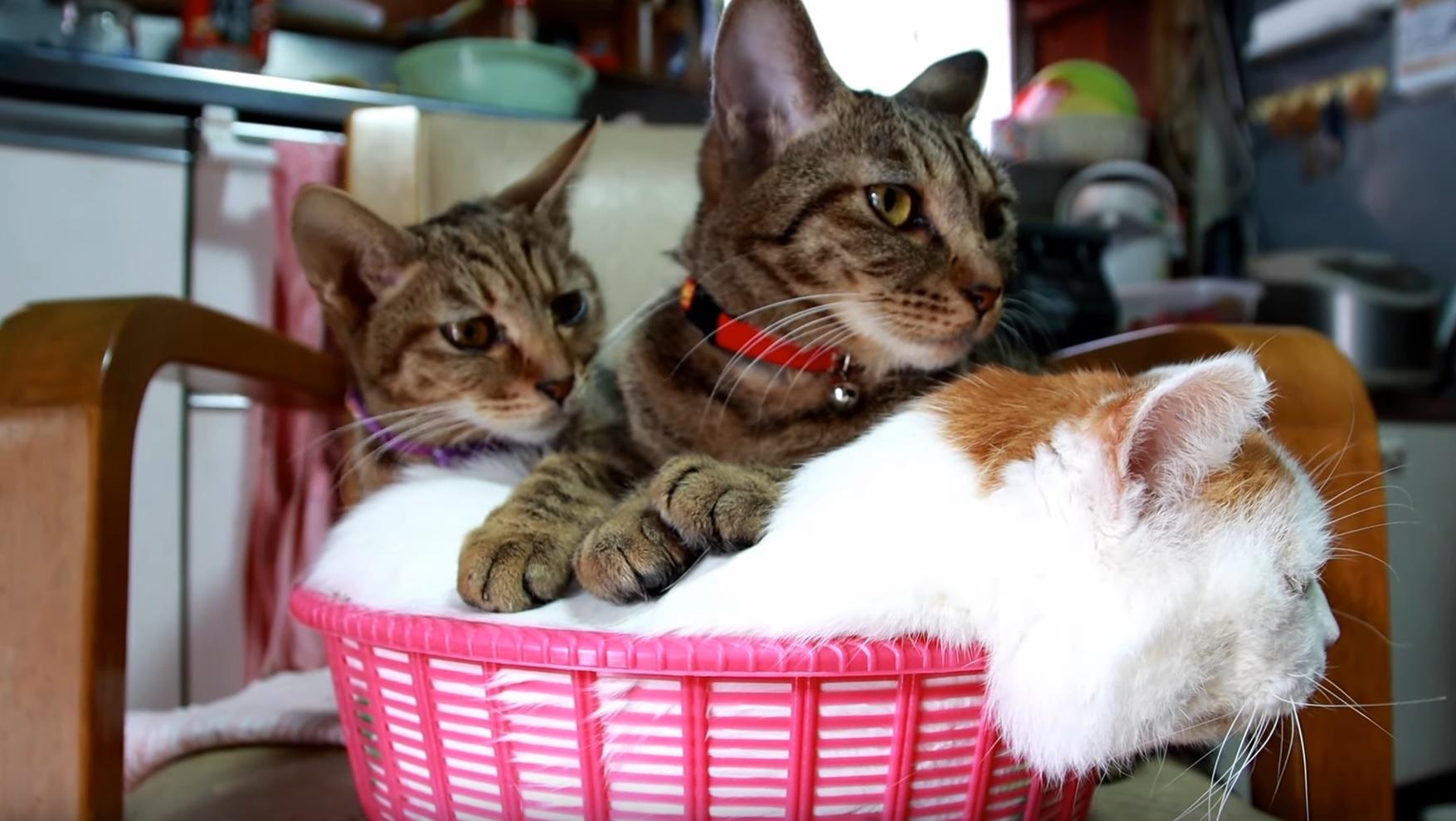 A Basket Of Cuteness