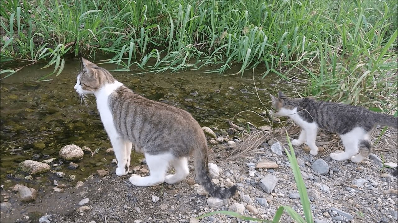 Playful Kitties By The River