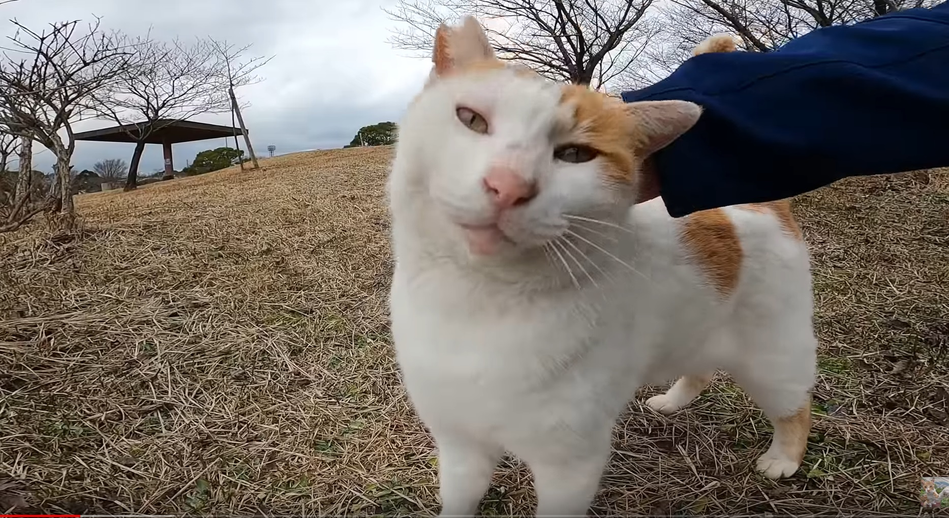 A Really Friendly Stray Cat