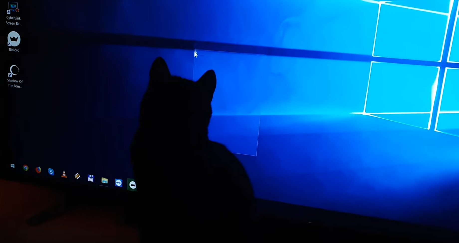 Kitty Chasing Mouse Pointer