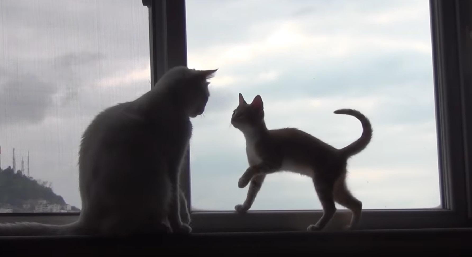 Kitten Tries To Win Older Cat's Heart