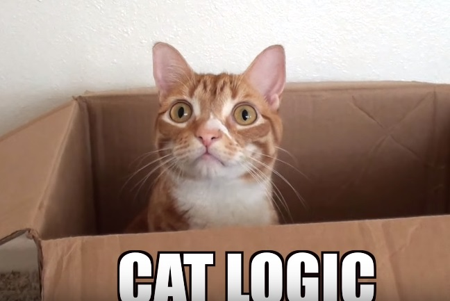 Some Funny Examples Of How Cats Think