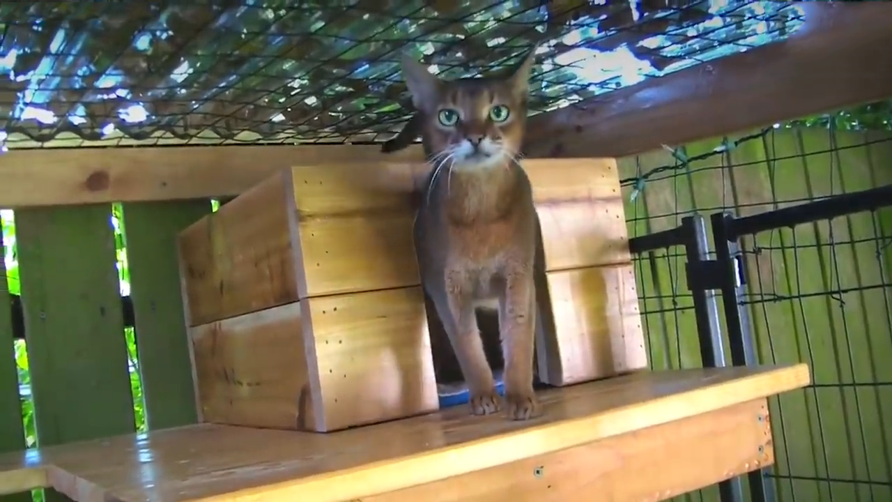 Some of the most epic cat cribs around there!