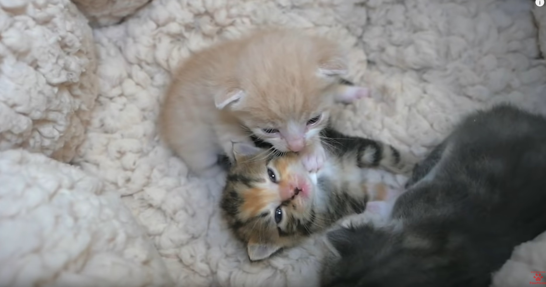 Cute Kittens In Their Bed
