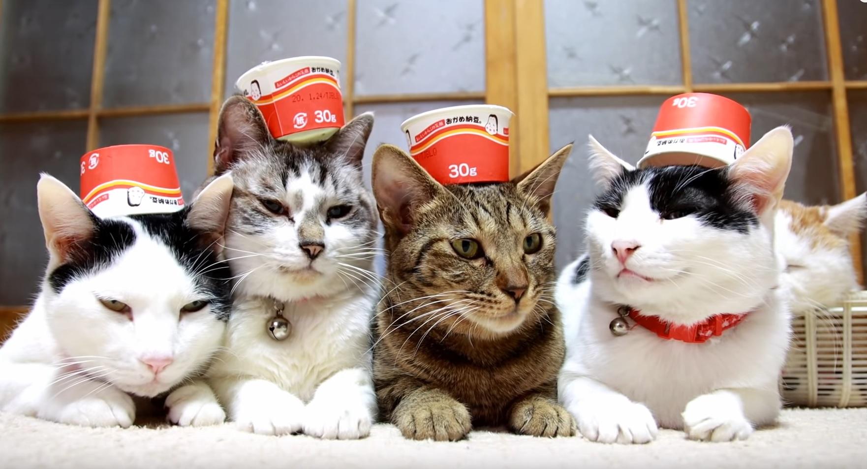 Zen Kitties