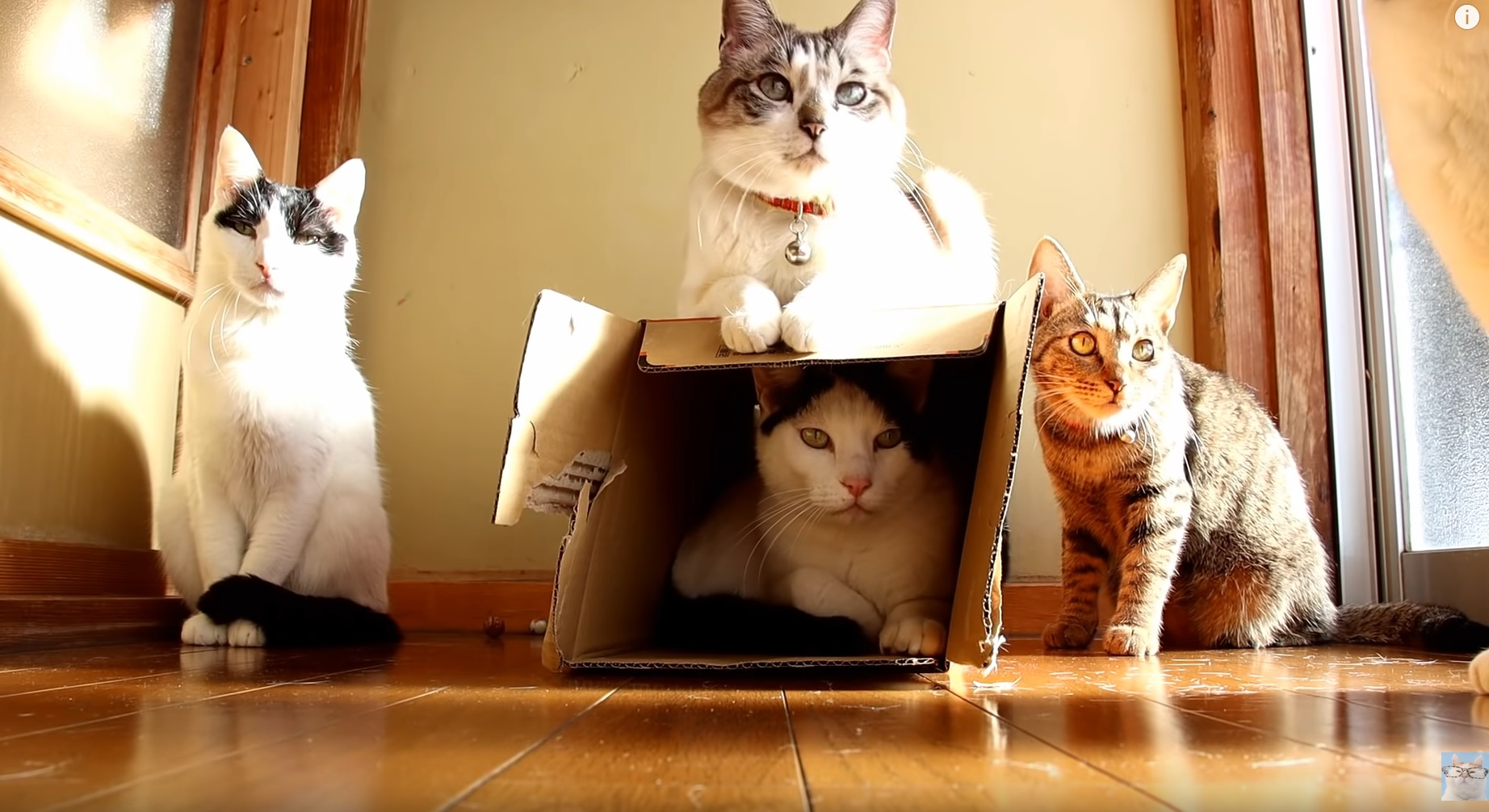Cute Cats Chilling