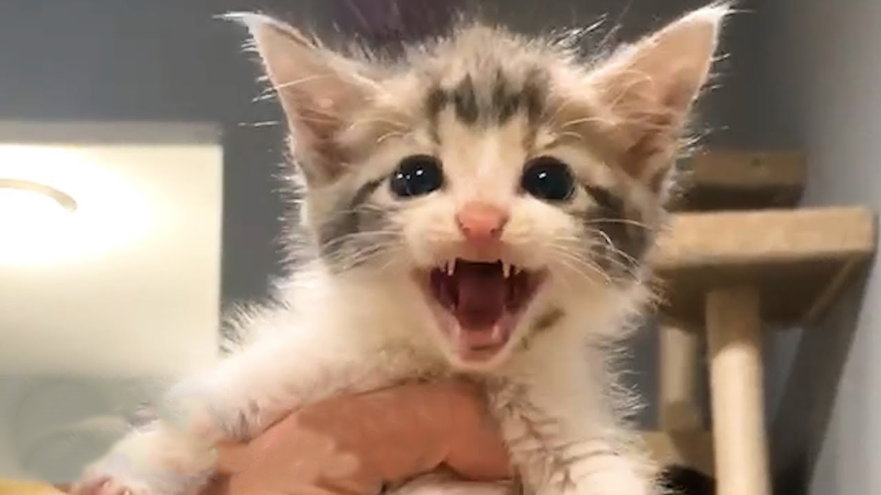 This permanent kitten never gives up!