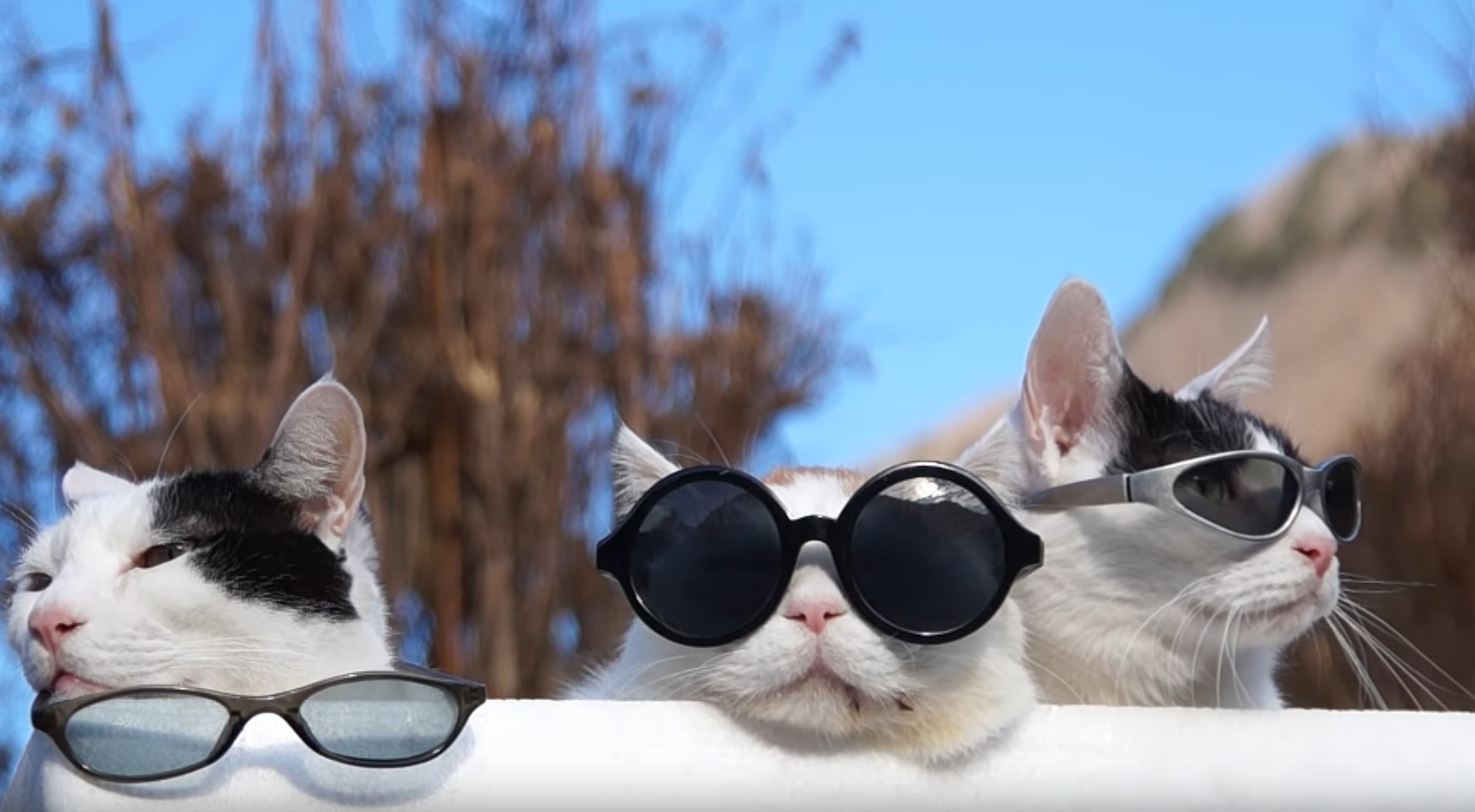 Cool Cats Hanging Out