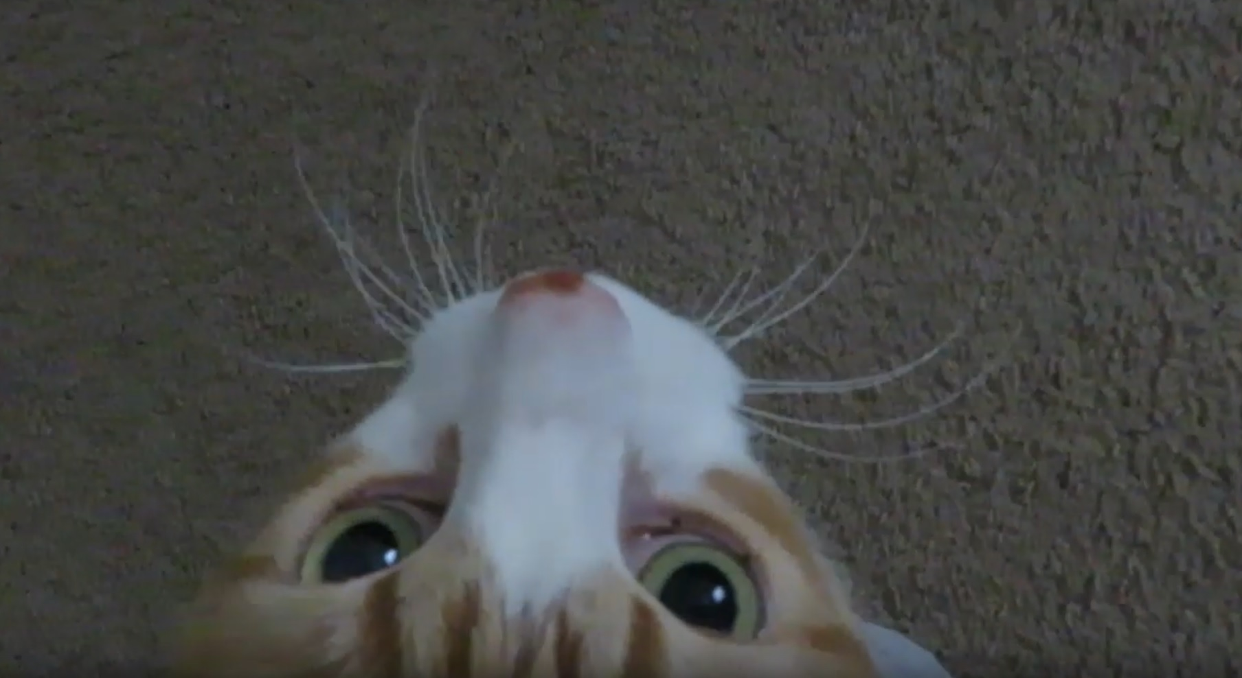 Follow And Feed Me Meow