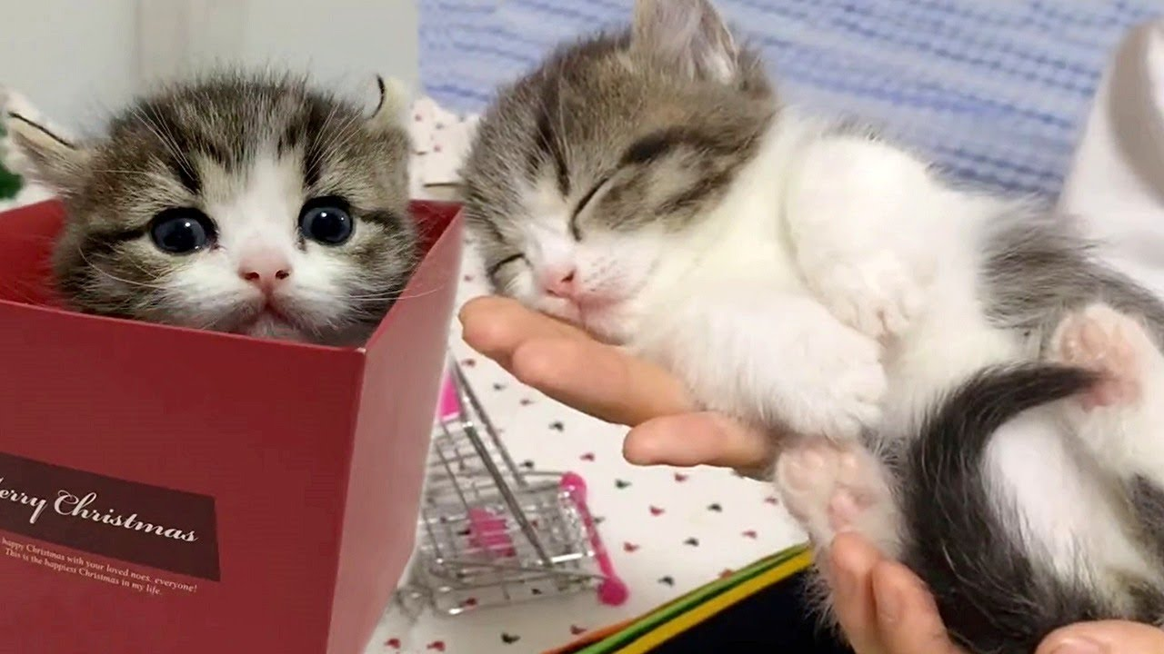 Cute Moments With Kittens