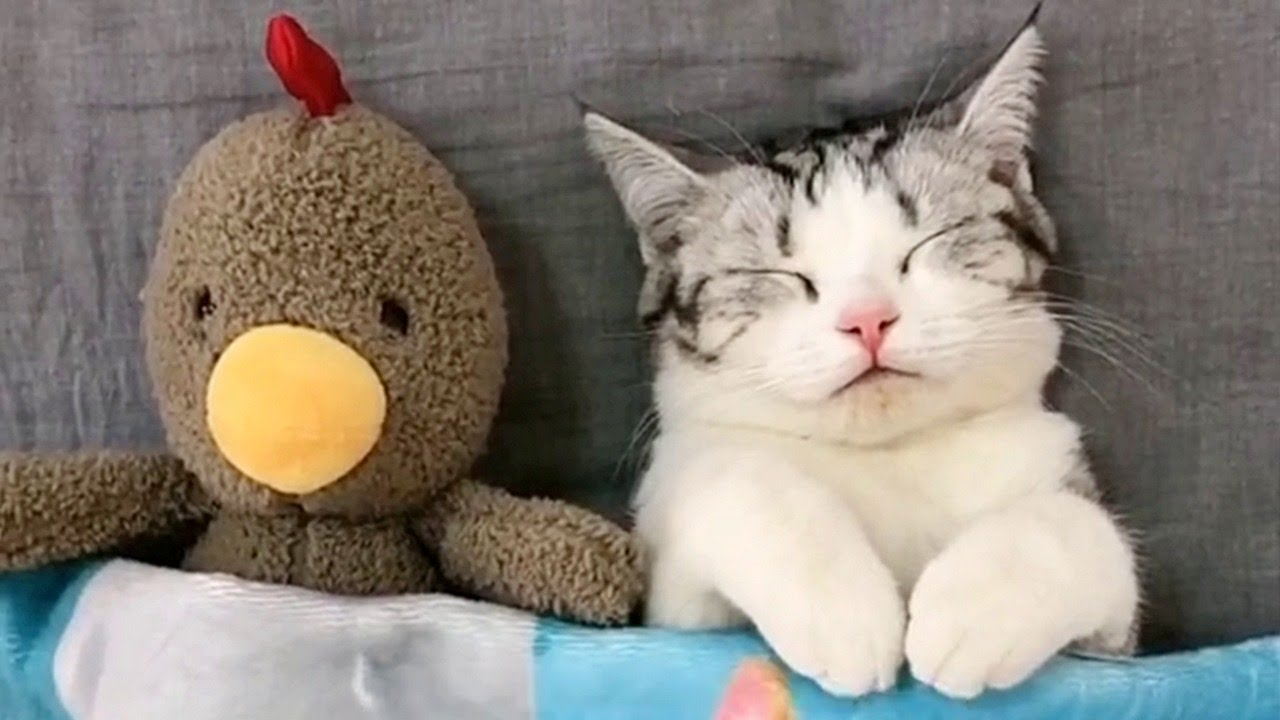 Kitty Sleeping With Plush Toys