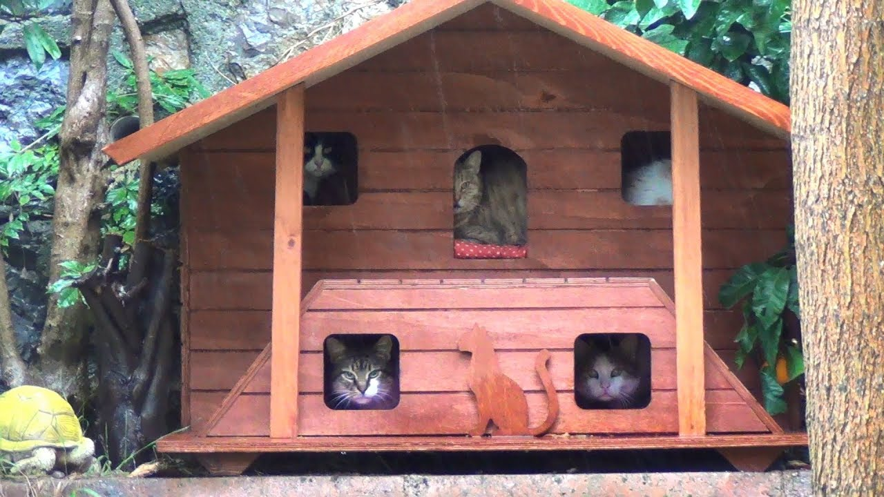 Cats and their outdoor bedrooms