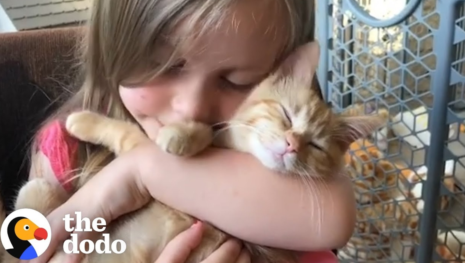 Cute Relationship Between Little Girls And Cats
