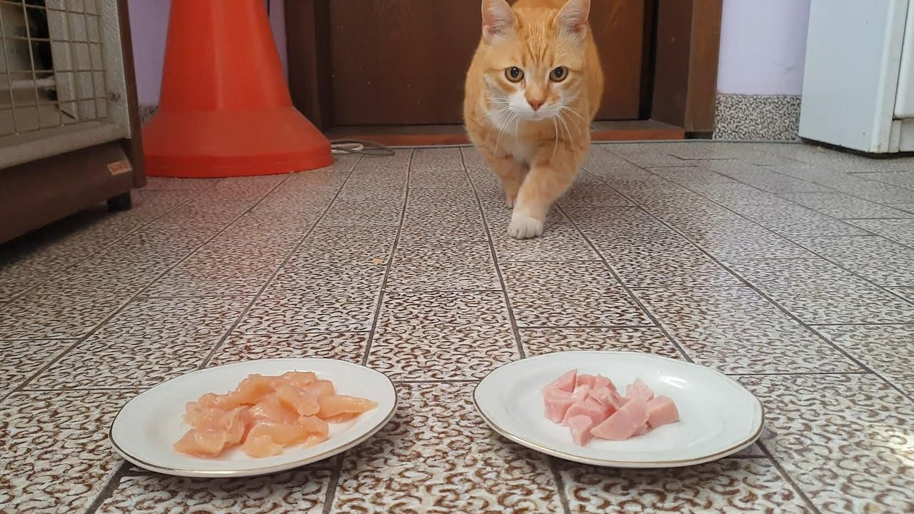 Cats Choosing Between Foods
