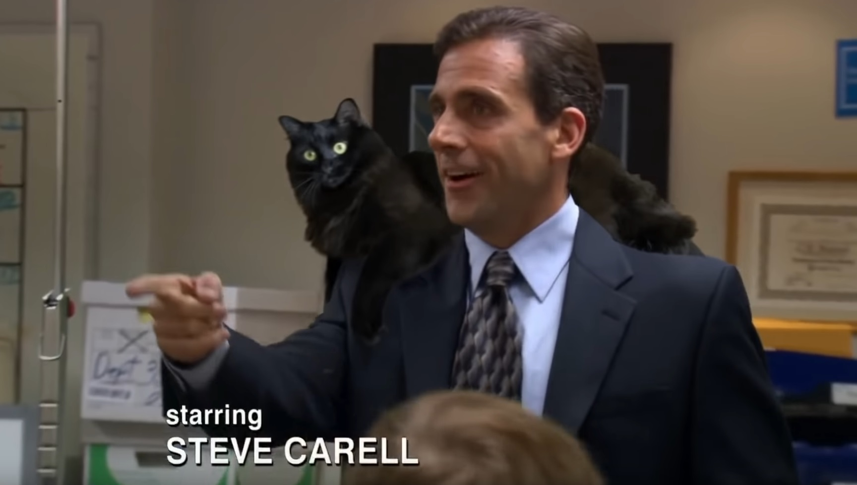 Owl Kitty - The Office