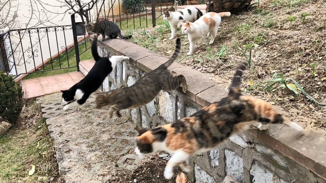 Purkour kitties