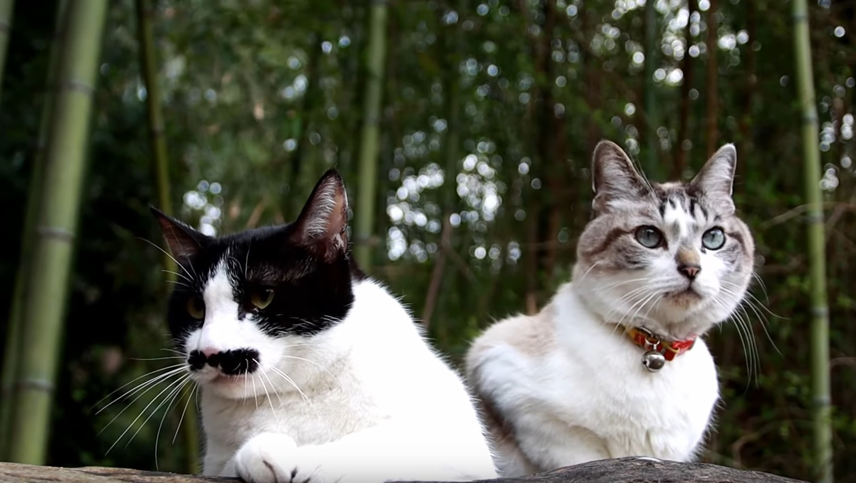 Cats Chilling And Meowing Outside