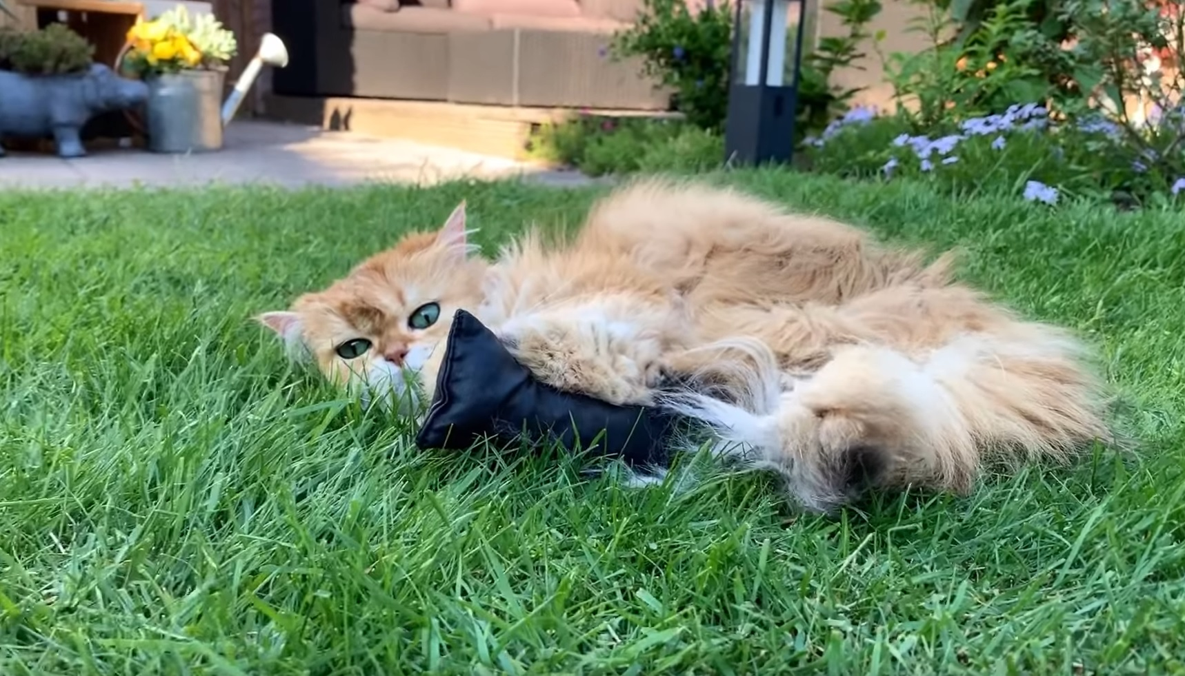 Beautiful Cats Rolling In Grass