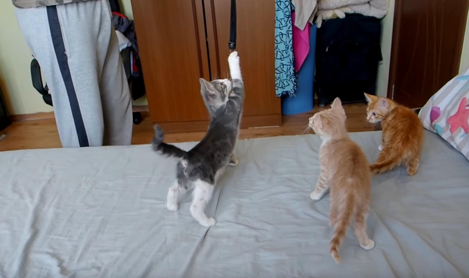 Four Playful Cats