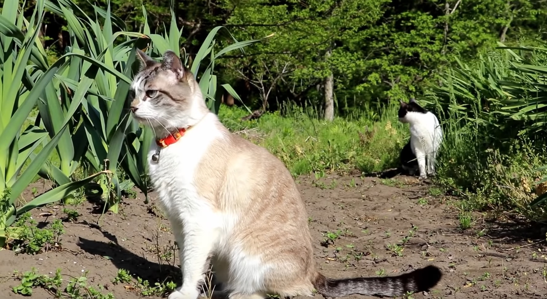 Cats Go For A Walk