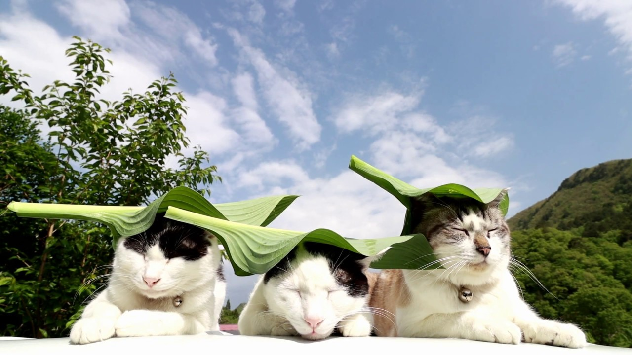 Cute Cats Hanging Out