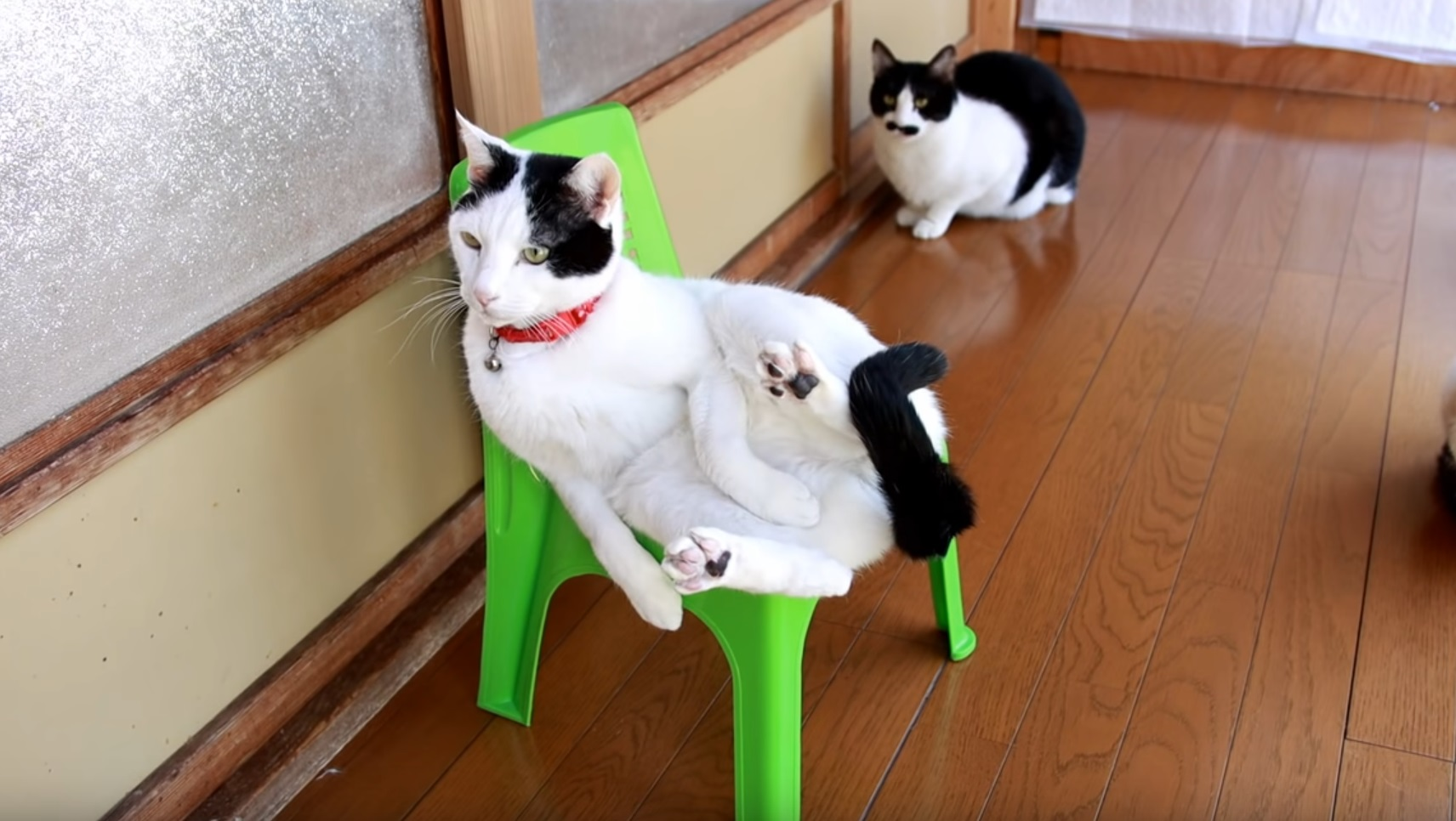 Cute Cats Sit On Chair