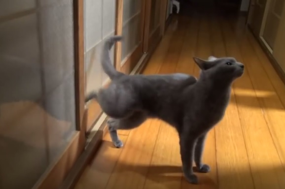 Cat Knocking On Door