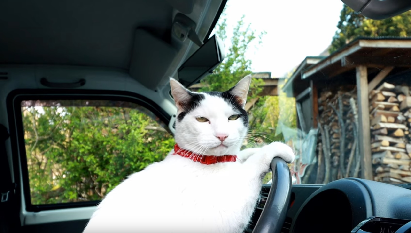 Kitty Chilling In The Car