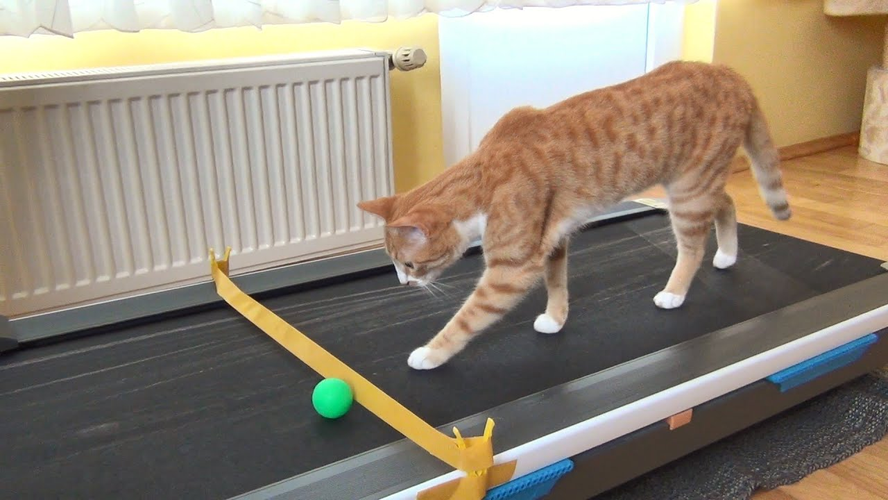 Curious About Treadmill