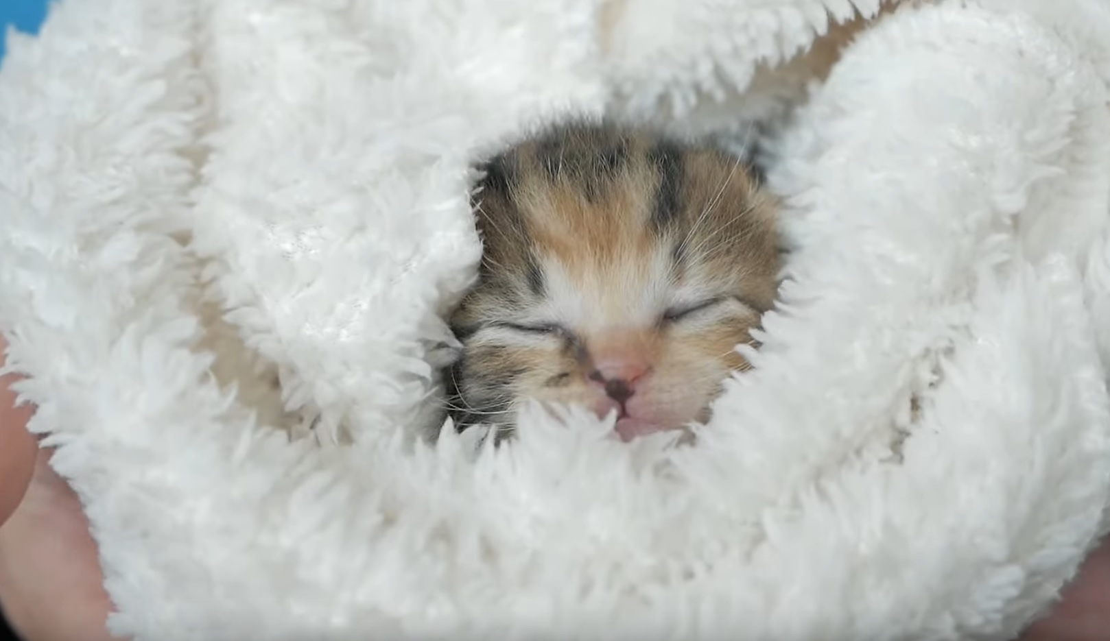 Tiny Cute Kittens Sleeping