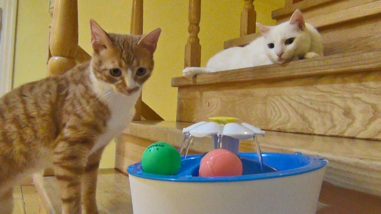 Curiosity of a young cat vs an older cat