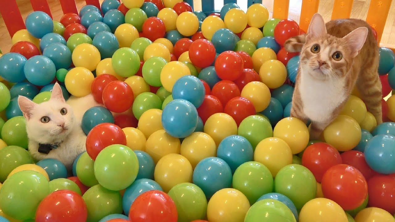 Two cats and the ball pit