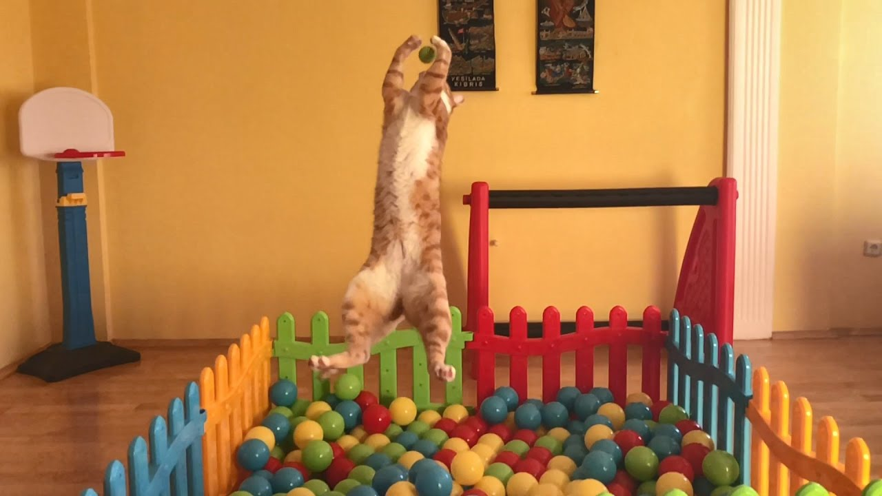 Indy, an acrobatic cat in slow motion