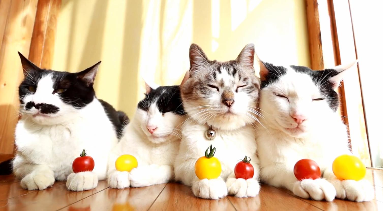 Patient Cats