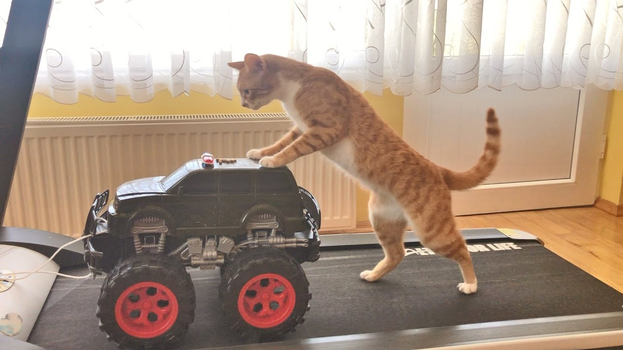 A kitty and a toy monster truck