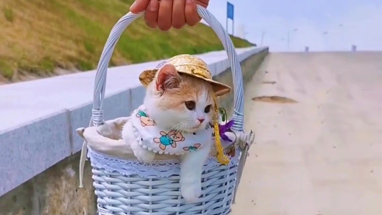 Cute Kitten In Basket