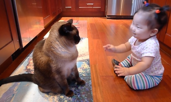 Patient Cat Listening To Baby