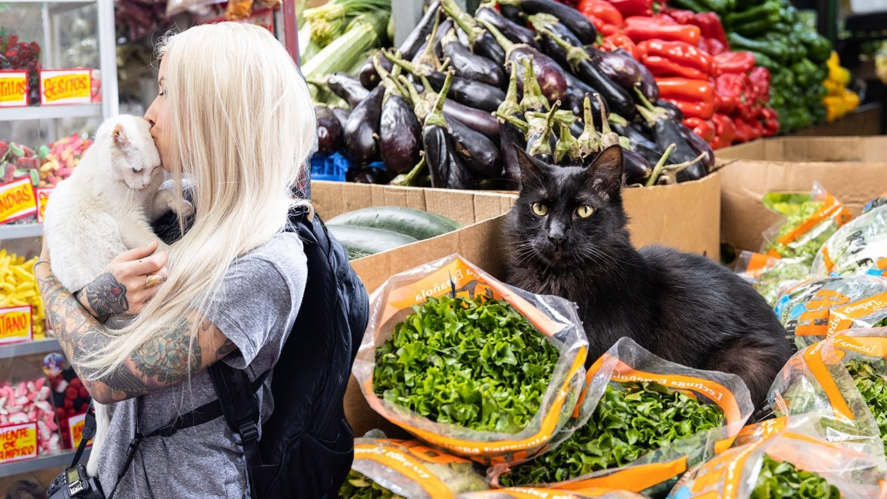 Meet The Market Cats of Chile