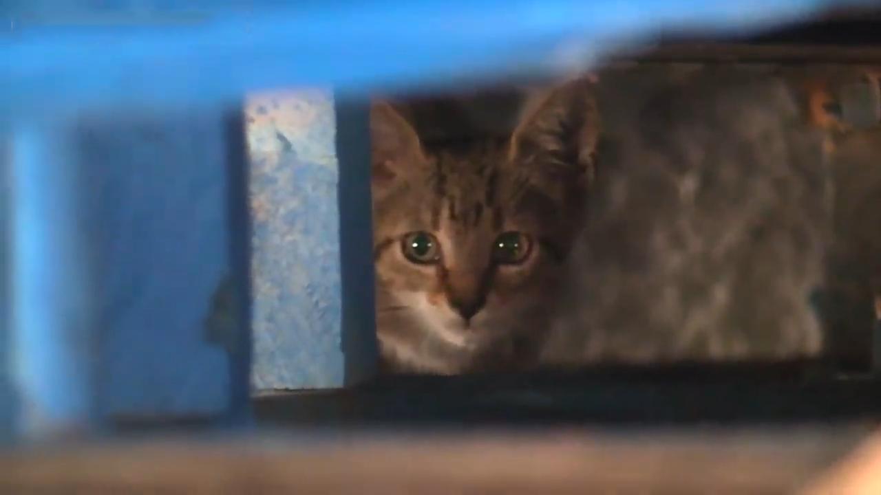 Cute kitten rescued from Walmart