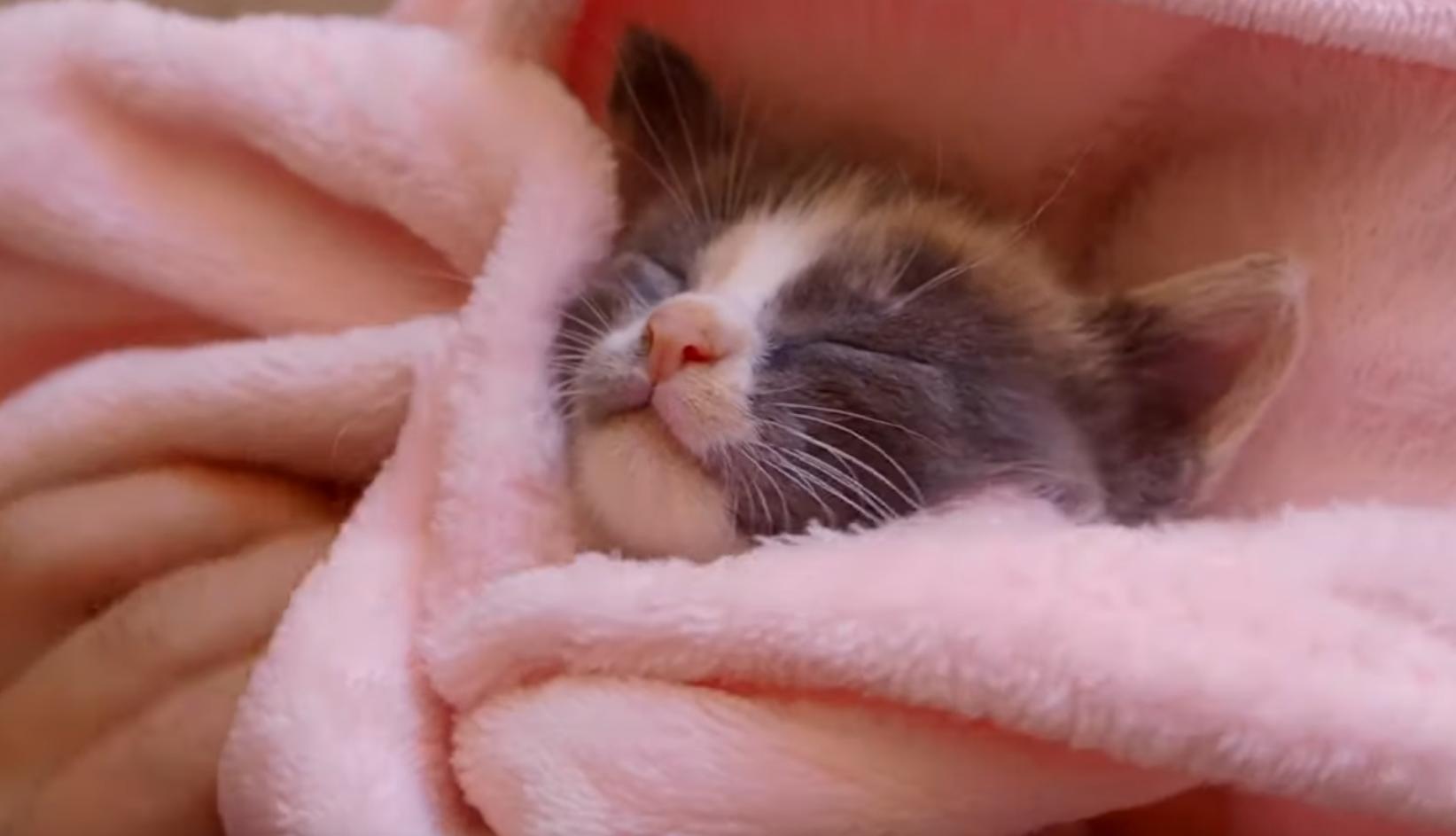 Kitten Loves Massage