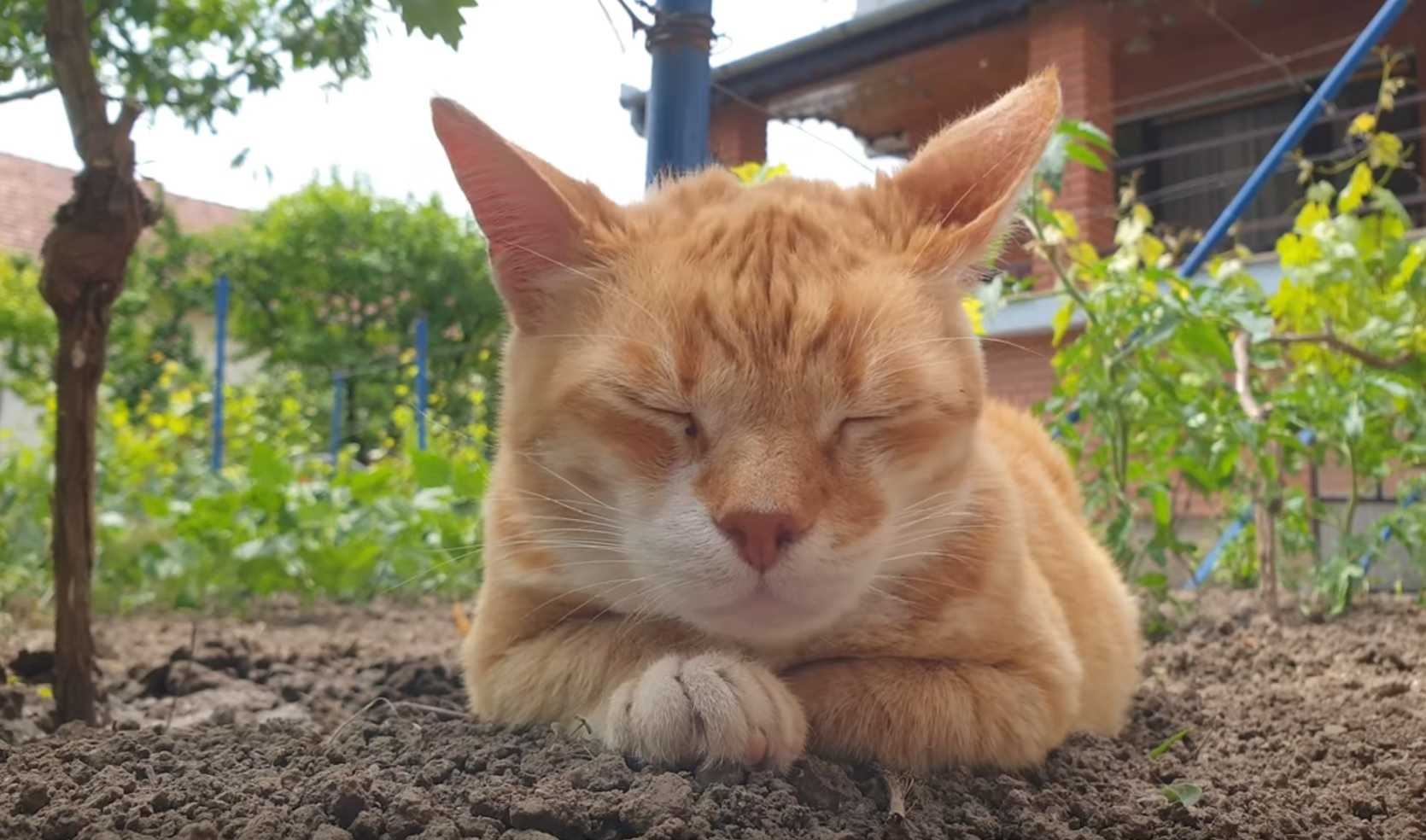 Gale Chilling Out In Garden