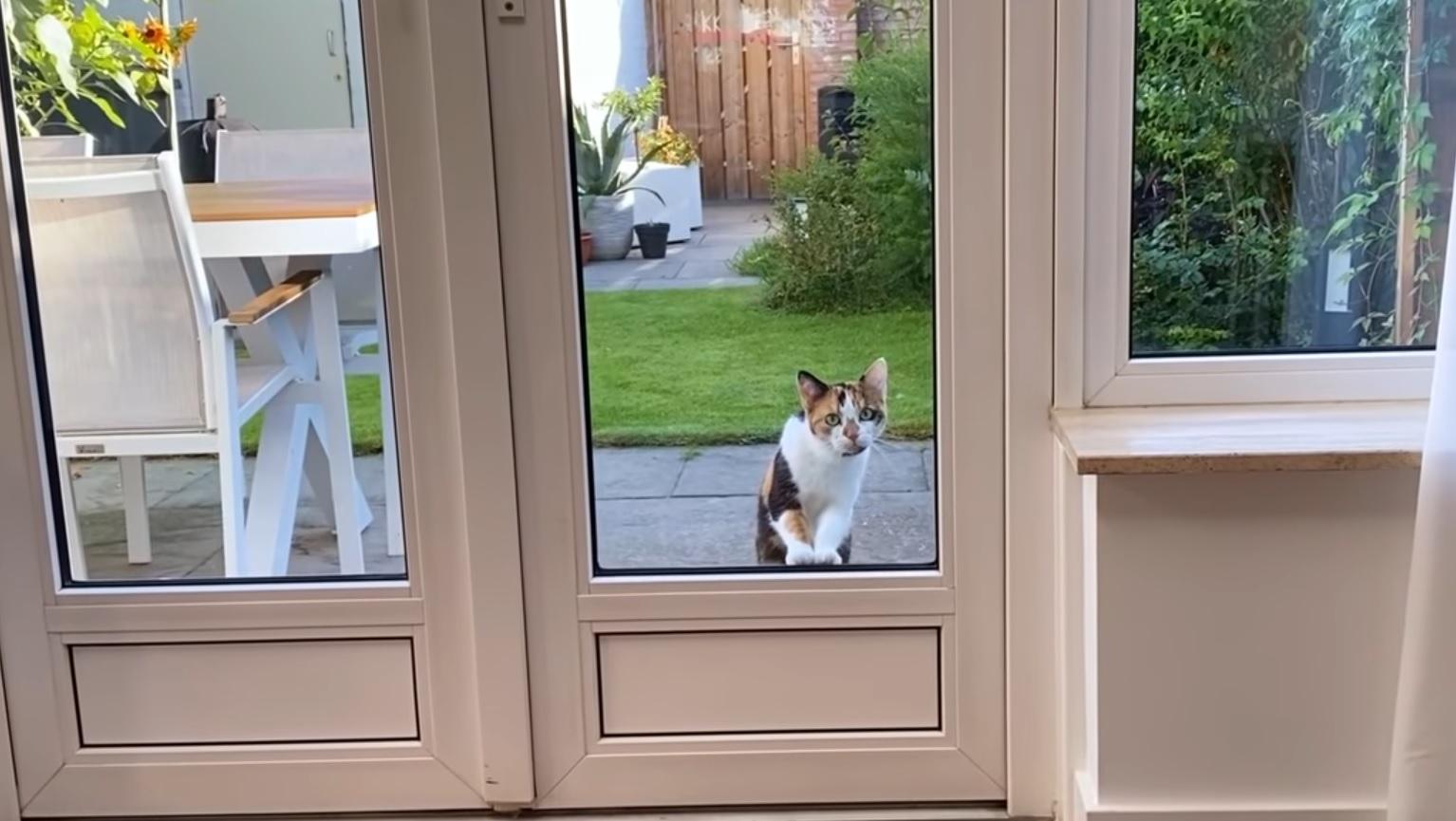 Cortado - The Curious Shy Cat