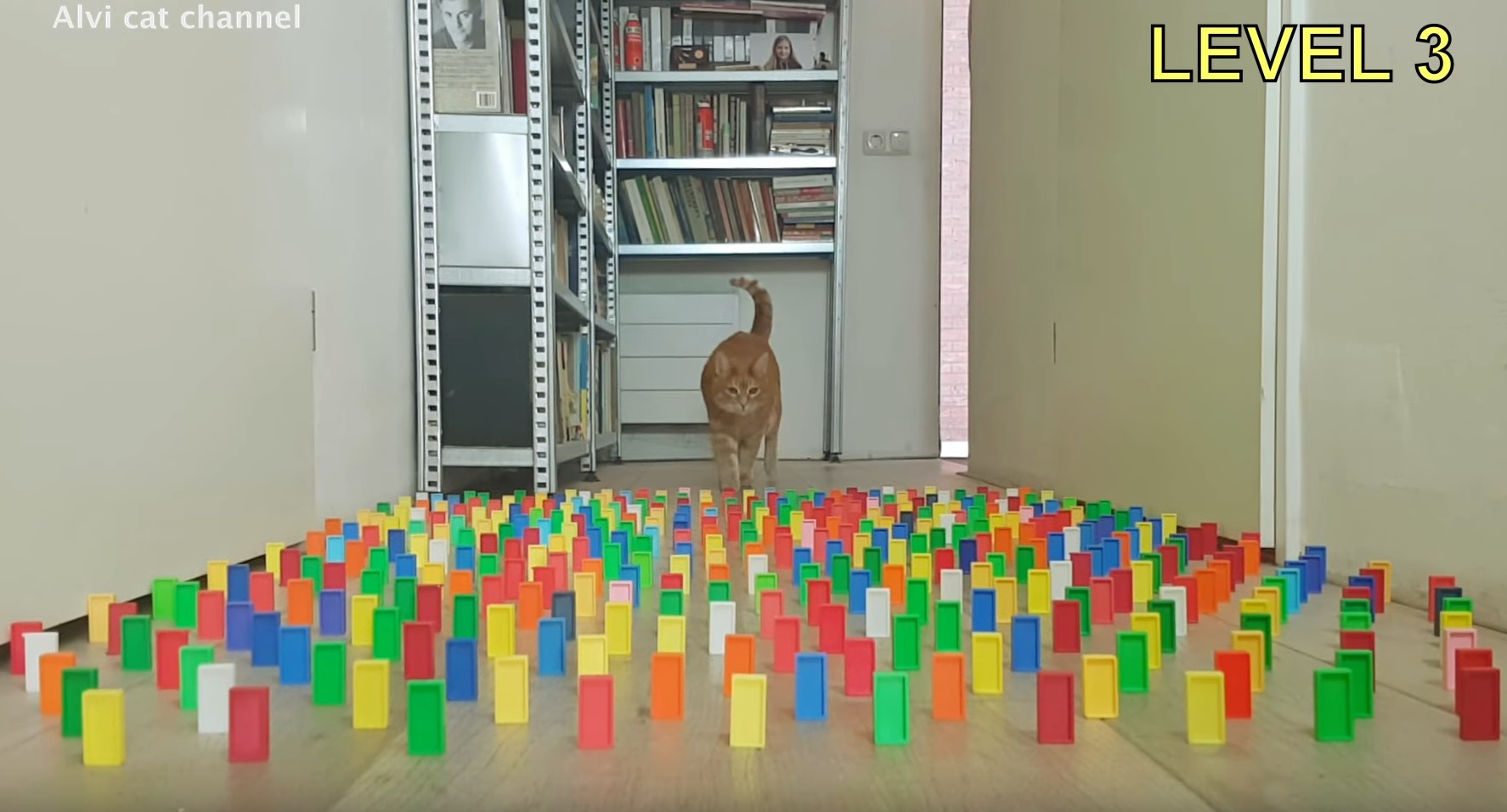 Alvi Cat - The Obstacle Challenge
