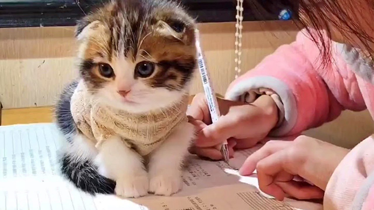 Cute Kitten Disrupts Homework