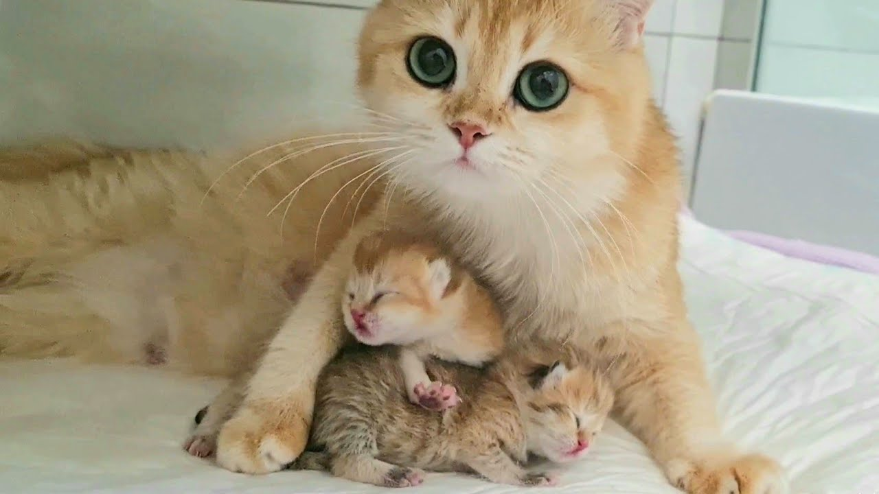 Happy Mom With Kittens