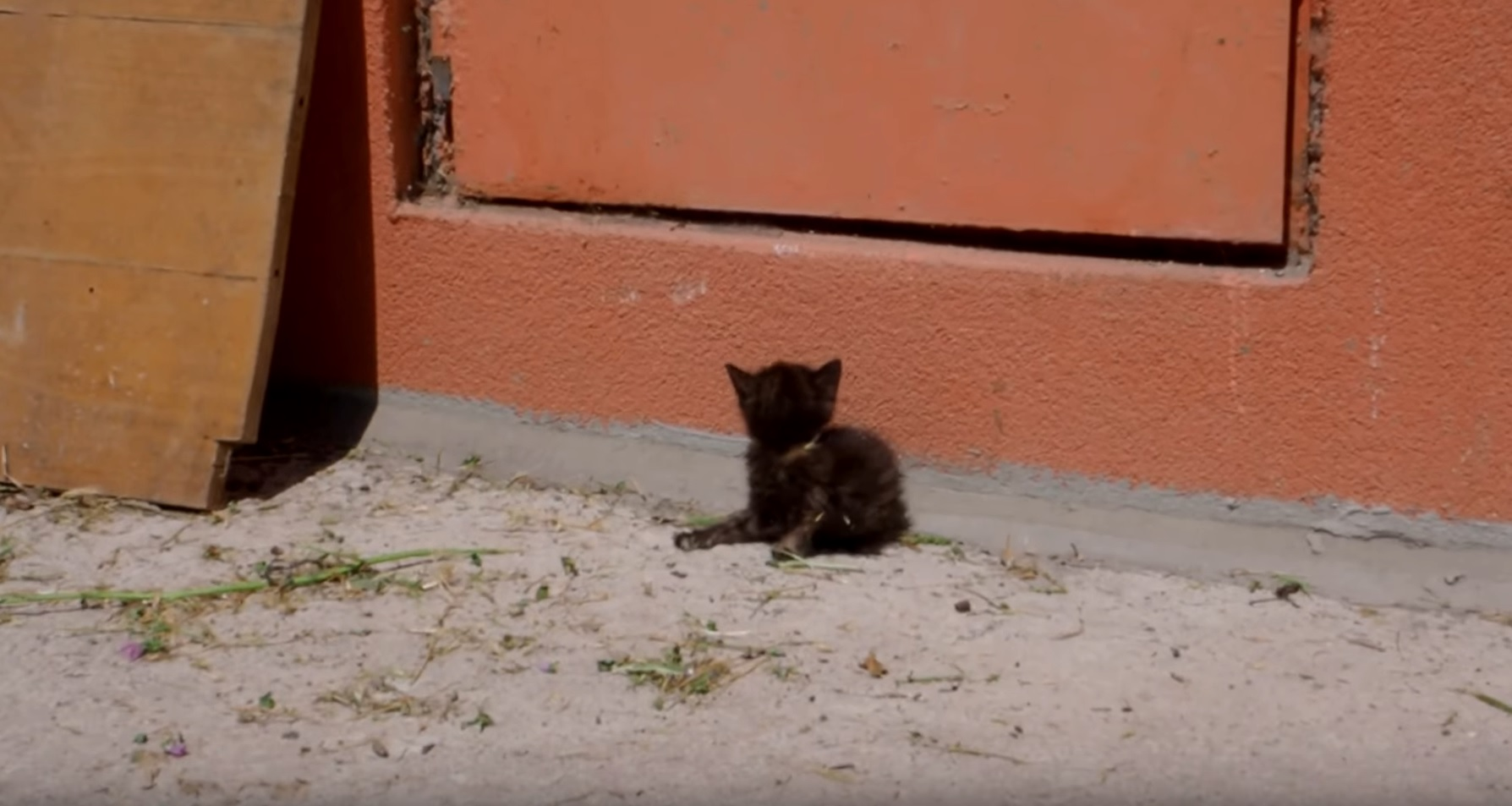 Blind Kitten Found On Street