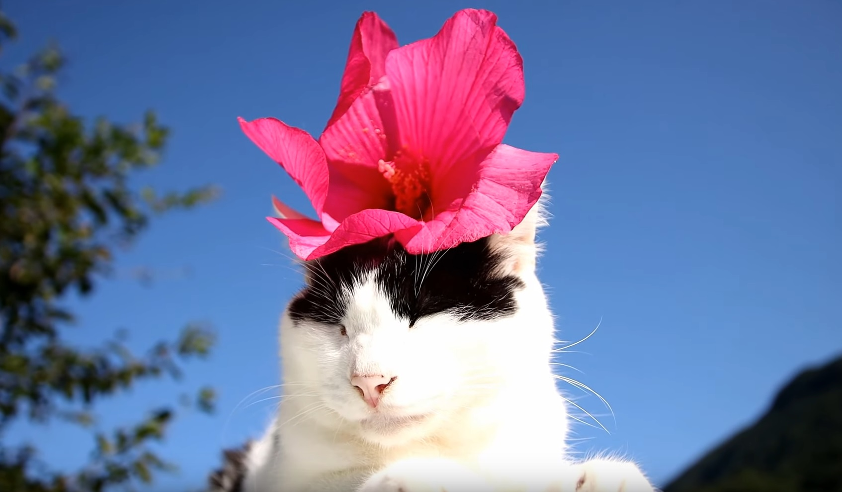 Cute Photogenic Cats
